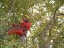 Baumpflege nach ZTV